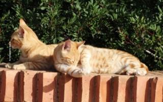 Как лечить лишай у кошек в домашних условиях