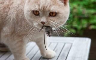 Глисты у кошек и котов – симптомы, фото и лечение глистов у котят