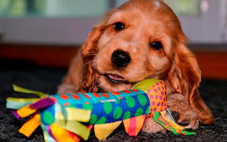 Игрушки для щенков  полезные аксессуары для воспитания и развития