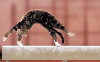 Учим кошку цирковым трюкам Часть вторая