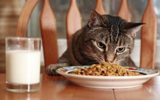 Какие крупы можно давать кошкам  подбираем вкусную и полезную кашу