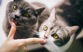 Уживаются ли кошки и аквариумные рыбки в одном доме