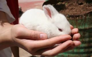 Как дрессировать декоративного кролика