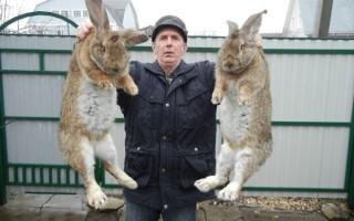 Чем кормить кроликов — правила организации питания кроликов