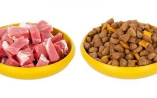 Кэт Чау – корм для кошек: цена, отзывы ветеринаров, состав