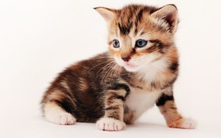 Особенности ухода за новорожднными котятами без кошки