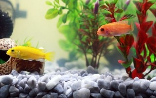 Мутная вода в аквариуме причина и способы ее устранения
