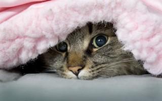 Если кошка гадит в неположенном месте причины и как ее отучить