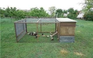 Домик для фазанов: как сделать вольер своими руками
