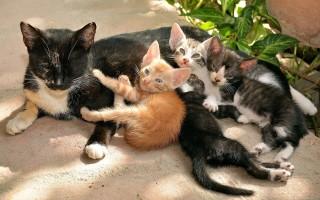 К чему снятся кошки и котята: основное толкование сонников, особенности значения для мужчины и женщины