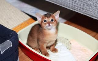 Кот гадит где-попало: почему, как отучить и что делать?