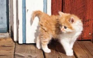 Клички для кошек: как можно назвать котенка-девочку, редкие, красивые, прикольные и легкие кошачьи имена в зависимости от цвета и породы