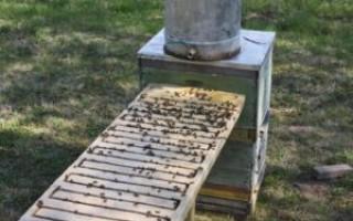 Поилка для пчел – учитесь и мастерите сами