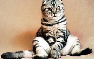 Стерилизация кота: причины, последствия, процедура, польза и вред