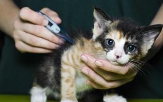Высокая температура у кошек