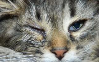 Уреаплазмоз – опасное бактериальное заболевание у кошек и собак