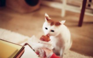 Каким должно быть питание кошек при мочекаменной болезни