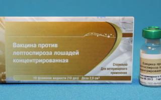 Вакцина против лептоспироза: инструкция по применению, дозировки