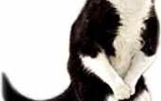 Как остановить понос у кота