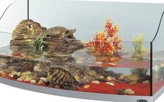 Свой угол террариум для сухопутной черепахи