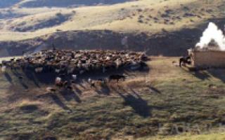 Кочевое скотоводство – производящее скотоводство