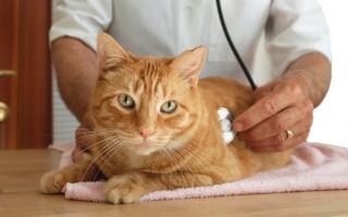Узнайте все об аллергии у кошек