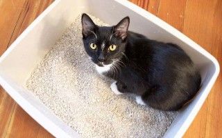 Что делать если котенок не может сходить в туалет по большому