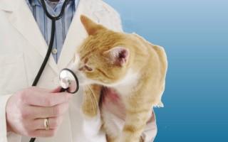 Серная мазь показания к применению для кошек
