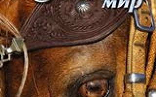 Породы лошадей чистокровные испанские лошади
