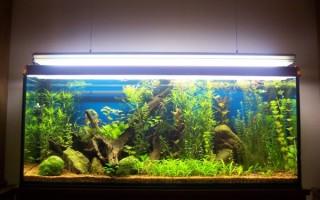 Почему цветет аквариум и как с этим бороться