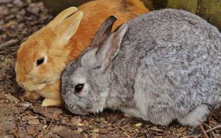 Кролик в квартире секреты разведения кроликов в квартире