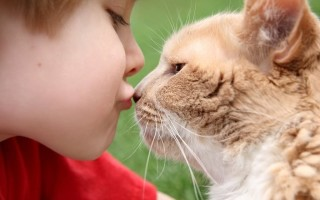 Можно ли заразиться стригущим лишаем от кошки