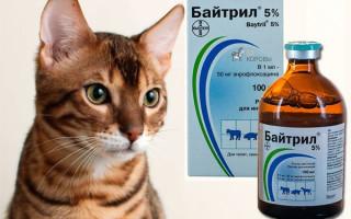 Байтрил для кошек: инструкция, аналоги, цена, отзывы