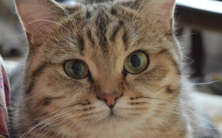 Виды окрасов у беспородных кошек