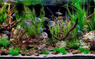 Как подготовить воду для аквариумных рыбок?