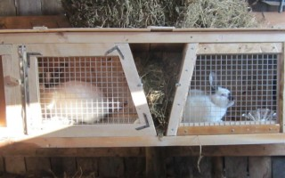Изготовление клетки для кроликов своими руками