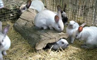 Что делать если кролик чихает