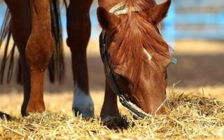 Содержание лошадей – как содержать и кормить лошадей самостоятельно, особенности и выгоды