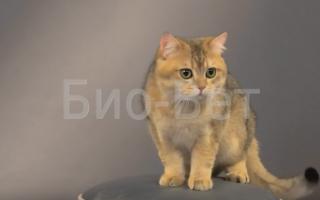 Непроходимость кишечника у кошек симптомы. Непроходимость кишечника у кошек и котов У кота не работает кишечник