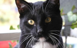 Что делать если у кота выпадают усы