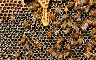 Подкормка пчел на зиму: что выбрать, когда кормить