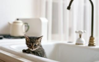 С какого возраста можно купать котят?