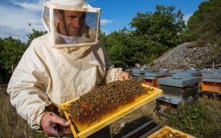 Выгодно ли заниматься пчеловодством и что можно продавать на рынке
