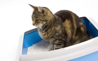 Как выбрать наполнитель для лотка для кошек: какой лучше