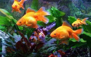 Запускаем аквариум первый раз