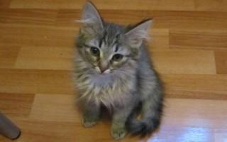 Глазные капли Левомицетин для кошек
