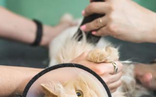 Рекомендации по выполнению стрижки котов