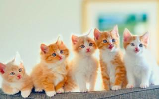 Как правильно подбирать клички для кошек и как приучить котенка к имени?