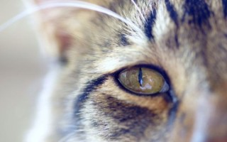 Что делать если у кошки слезится глаз