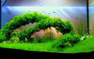 Оформление аквариума: красивый дизайн своими руками